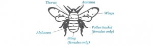 Bee_diagram_RS_550_168